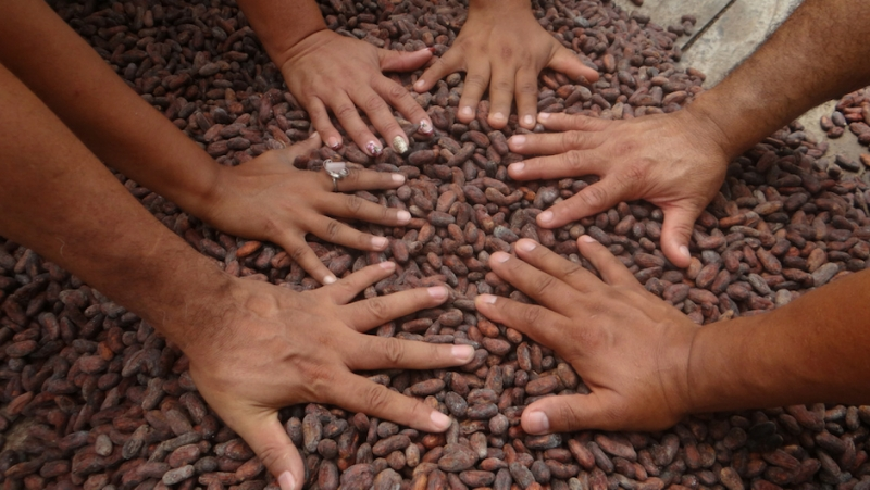 six people placing their hands on top of a pile of cocoa beans