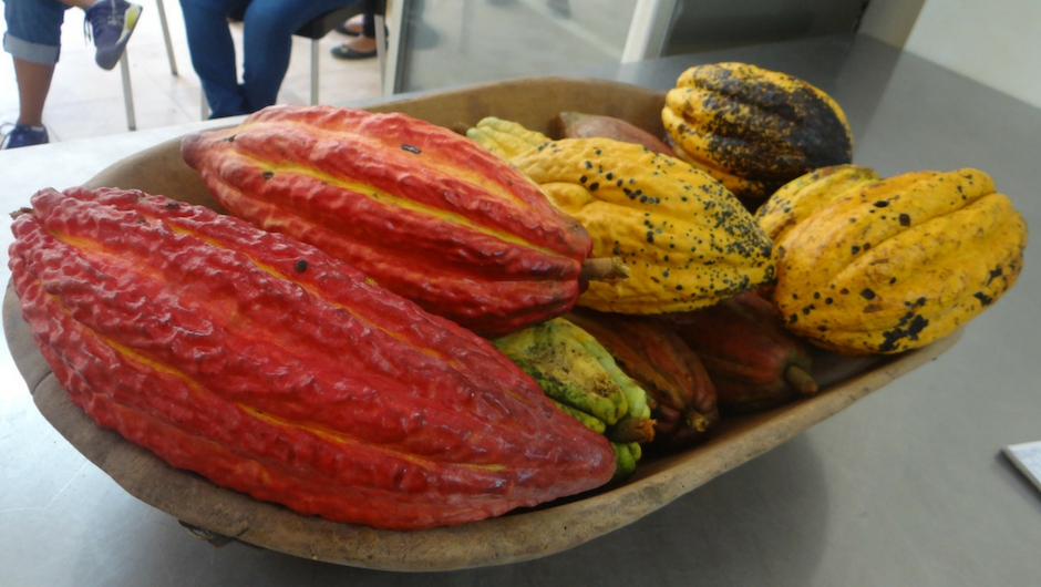 photo of the different types of cocoa pods