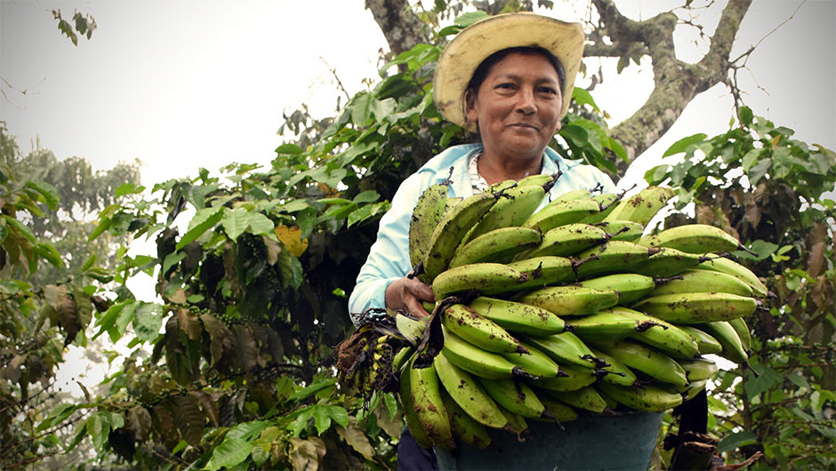 A female producer holds a crop of bananas.