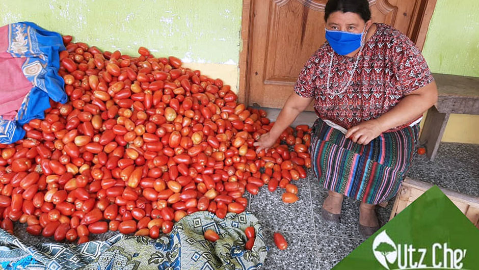 A Guatemalan woman wearing a face mask sits next to a pile of homegrown tomatoes.