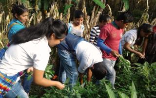 Jóvenes guatemaltecos participan en una actividad de Utz Che.